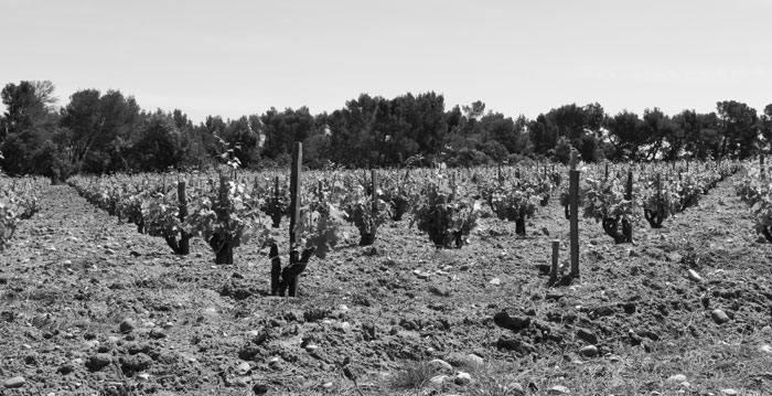vins de la Vallée du Rhône septentrionale