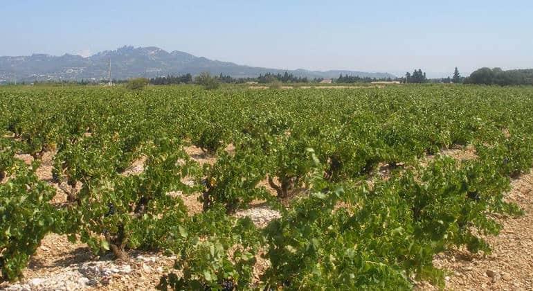 Vendredi 15 mars dégustation Domaine de L'Espigouette à La Cave du Vigneron