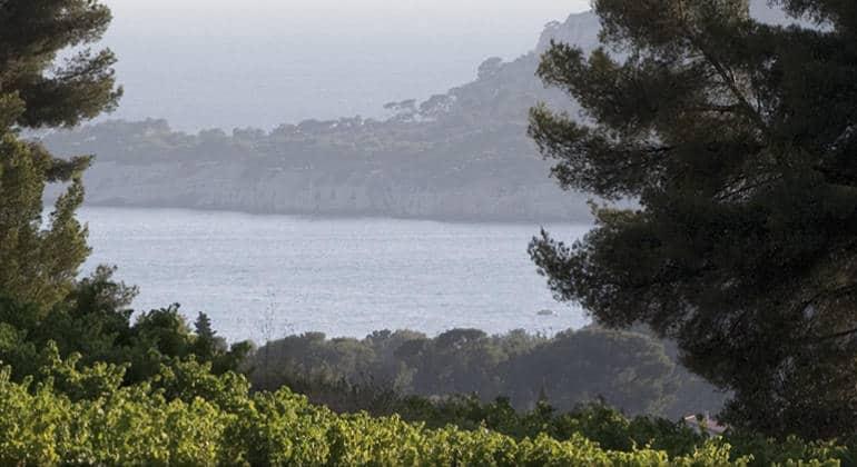 Dégustation Domaine du Paternel – AOC Cassis – Vendredi 7 juin à La Cave du Vigneron