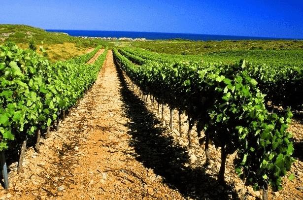 Vendredi 9 octobre : Cap sur La Clape, un vignoble marin.